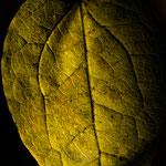 Herbstblatt-1