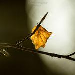 Herbstblätter im Winter-3