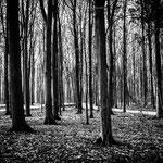 Winterwald-3