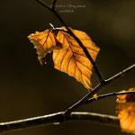 Herbstblätter im Winter-2