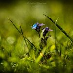blue Spring-7
