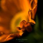 Friedhofsblume-1