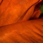 orange think-1