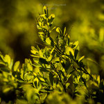 grüner Frühling-2