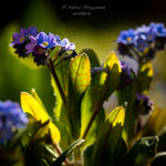 blue Spring-5