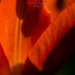 roter Frühling-3