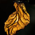 Herbstblätter im Winter-6