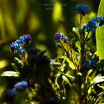 blue Spring-9