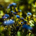 blue Spring-10