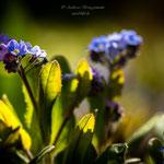 blue Spring-2