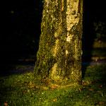 Friedhofsansicht-2