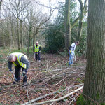 Creating the glade