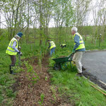 Preparing and planting hedgerow