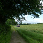 Mowing Gillfield Wood at the back