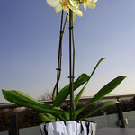 Blumentopf - ein Geschenk der einzigartigen Art