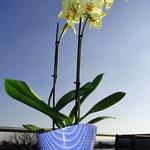 Blumen in kreativem Topf