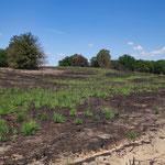Verbrannte Heide in De Meinweeg