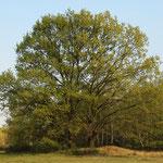 Ein Baum? - Nein 2!