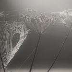 Altweibersommer - Spinnennetze