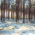 Winter im Kiefernwald, Schweden, Smaland