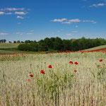 Blick über Uckemarker Felder