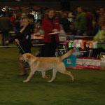 Svētes Jasper Jespah Norton. Excellent, PP, CW, JCAC, 3rd best dog. Hendlere Laura Brante.
