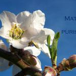 6° giorno: Mater purissima: ora pro nobis et omnibus.