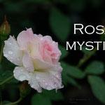 9° giorno: Rosa mystica: ora pro nobis et omnibus.