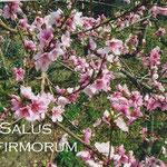 4° giorno: Salus infirmorum ora pro nobis et omnibus.