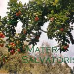 3° giorno: Mater Salvatoris: ora pro nobis et omnibus.