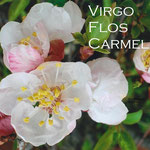 1° giorno: Virgo Flos Carmeli: ora pro nobis et omnibus.