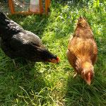 Berthe et Colette , nos poules !