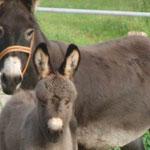 Odi's flauschiger Pony lädt zum Kraulen ein