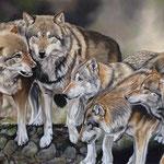 Wolfsrudel, Pastell (Auftragsarbeit)