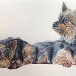 Ginny & Maxi , Pastell (Auftragsarbeit)