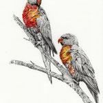 Loris, Bleistift & Aquarell (ZU VERKAUFEN/ FOR SALE)