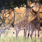 Giraffen und Oryxantilopen, Öl (Auftragsarbeit)