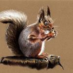 Eichhörnchen, Pastell (verkauft/ sold)