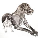 Hunde in XS und XL, Bleistift (Auftragsarbeit)