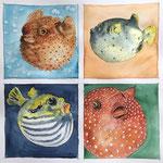 Vier Kugelfische, Aquarell (Auftragsarbeit)