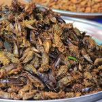 Nichts geht ueber einen Insektensnack!