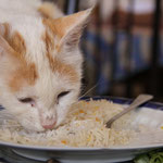 und zu heiss um zu essen...der Katze schmeckts :)