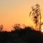 Sonnenuntergang in der Karakumwueste