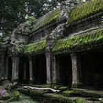 Dieses Moos welches sich ueber hunderte, ja tausende von Jahren ueber die Steine zog, wunderschoen