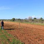 Ein ganzes Feld haben sie gerodet und pflanzten Olivenbäume, der kleinste, das Bertheli will aber noch nicht so recht!
