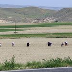 Die Frauen bei der Feldarbeit