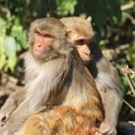 Was für ein Affenleben