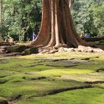 Noch so ein Stein-Moos-Baum Bild