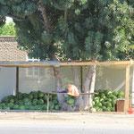 Wassermelonenbaum mit Bett, falls er muede wird