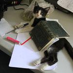 Heute schreibt die Katze meinen Blog, die kennt sogar die Kommaregeln!